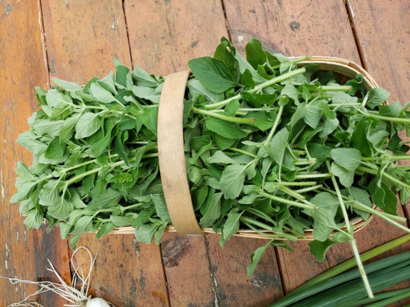 Origan cultivé sur les plateaux de la Beauce (Boîte de 15g)