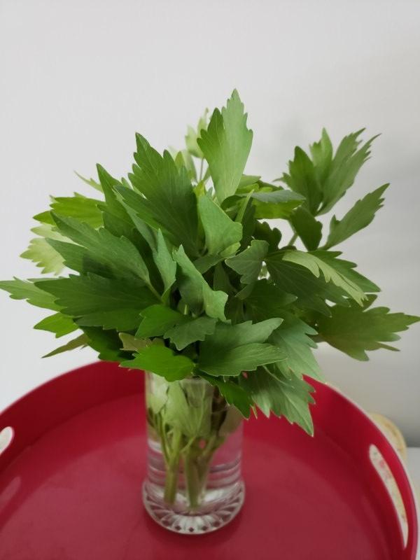 Livèche (tiges et feuilles) (Bouquet)