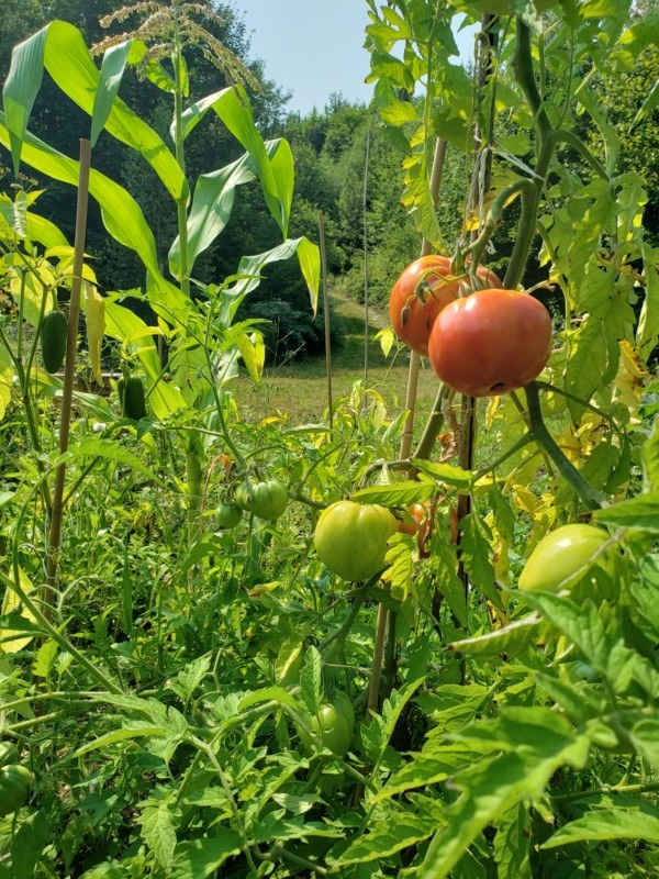 Tomates rouges (100g)