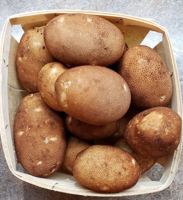 Pomme de terre grelots (3$/kg)